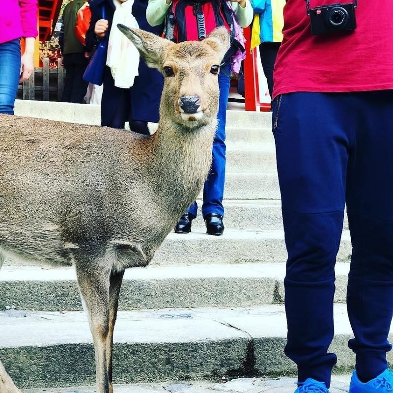 The Coexistence between Deer and Human