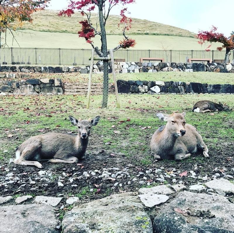 Deers on the mt.Wakakusa in Nara