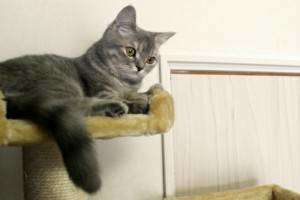 キャットタワーの1番上にいる猫