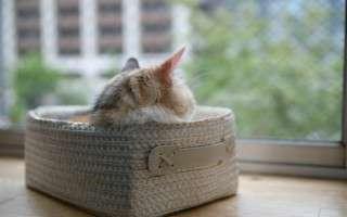 窓から外を眺める猫