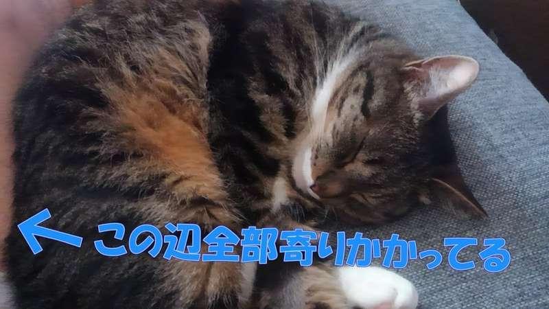 足に寄りかかって寝る猫