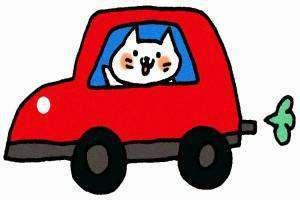 車に乗っているネコ