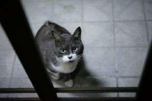 夜の窓際の猫