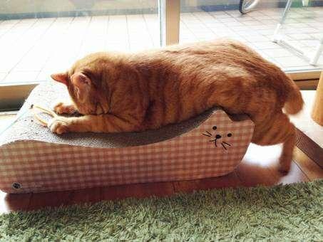 爪とぎに突っ伏して眠る猫