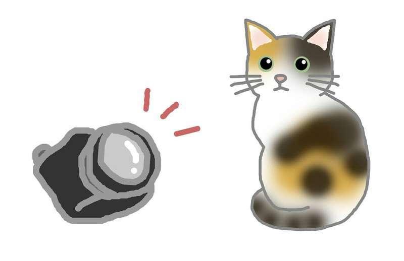 カメラで猫を撮影している