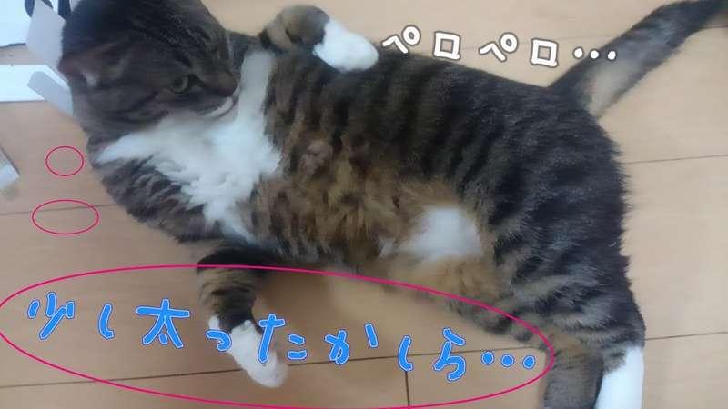 おなかの毛繕いをする猫の写真
