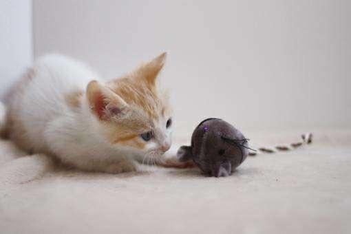 ネズミを持ってくる猫