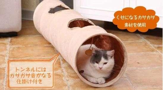トンネルでくつろぐ猫