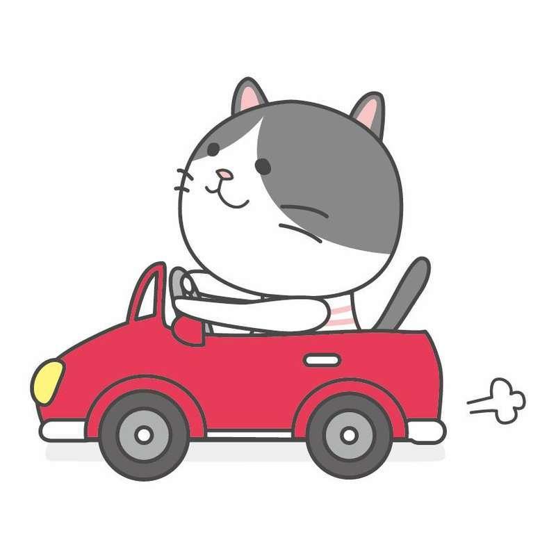 車を運転する猫
