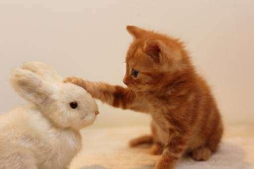 うさぎを撫でる子猫