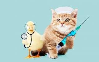 注射器を持った猫とアヒル