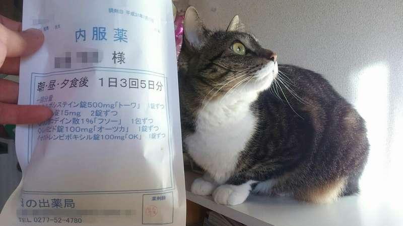 インフルエンザの薬と猫