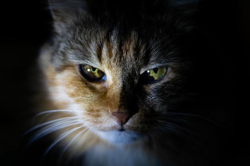 PS4とモンハンを狙う野良猫