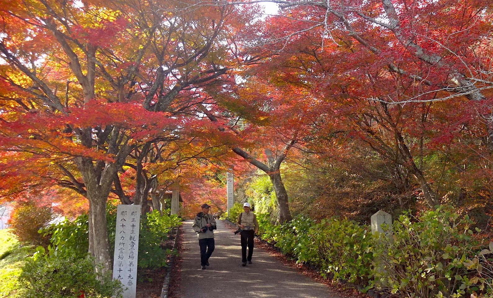 https://cdn-ak2.f.st-hatena.com/images/fotolife/s/shioshiohida/20171117/20171117133018_original.jpg