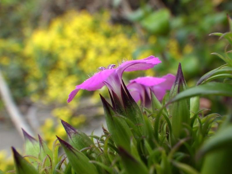 横アングルの花