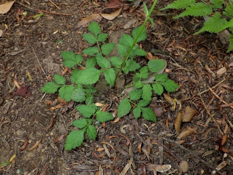 葉の写真2