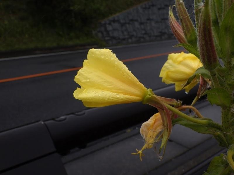 花後の様子