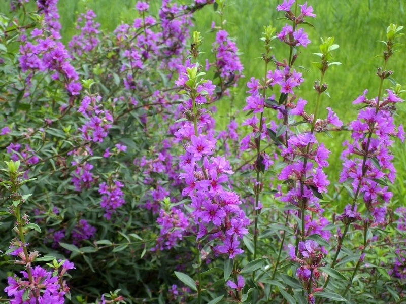 花の写真 全体像1