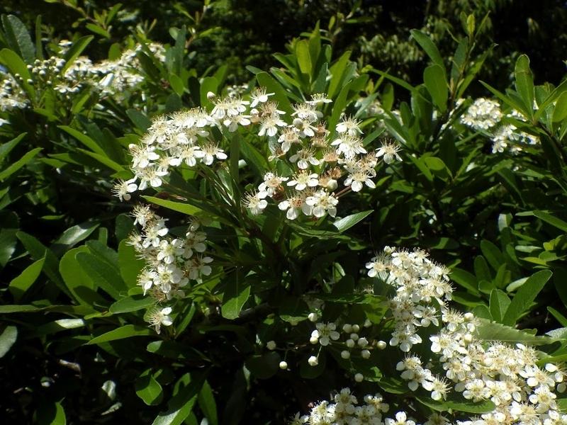 花の写真 花序