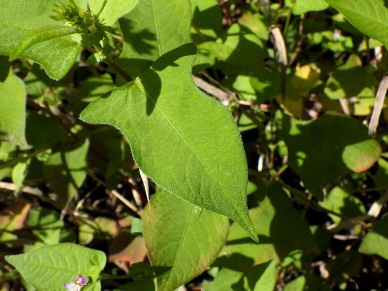 葉の様子1