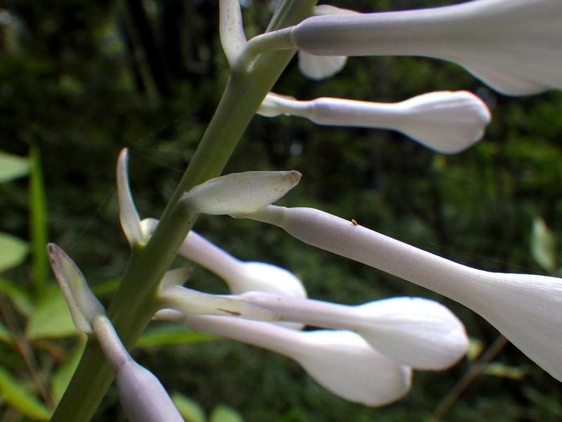 花の基部の様子