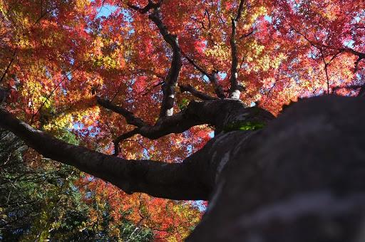 香嵐渓のすぐそばにある飯盛山の紅葉もなかなかきれいです