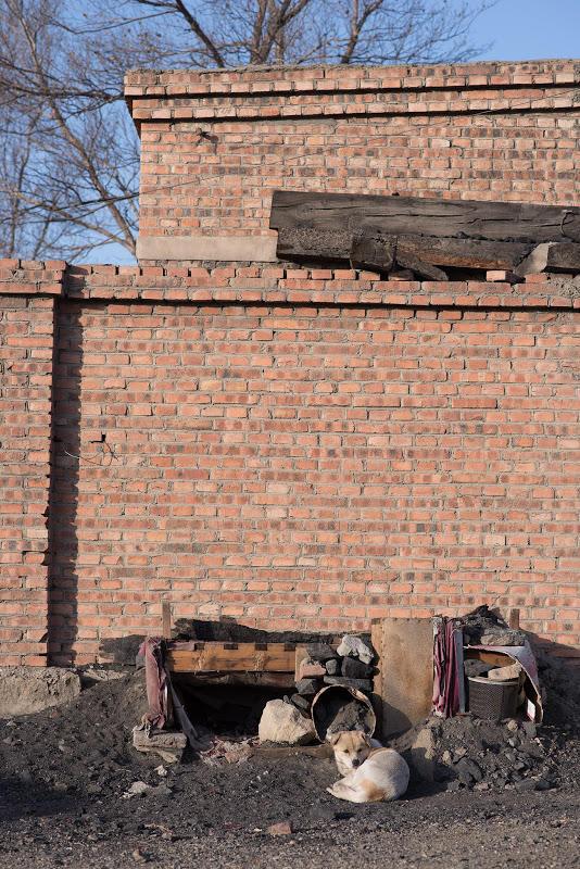 180103 坑口站横の犬小屋