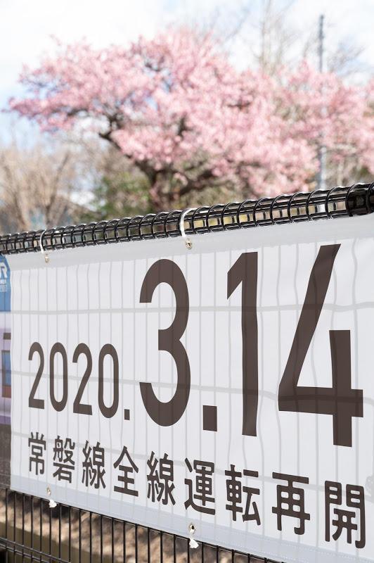 200315 大野駅横断幕と桜