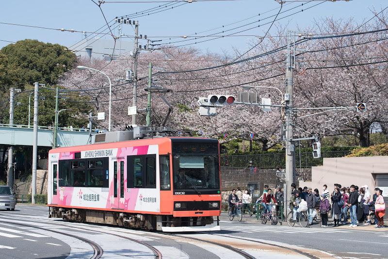 180325 桜模様の都電と桜