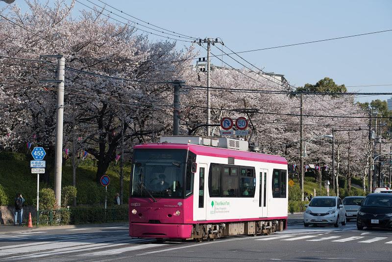 180325 都電8800形と桜