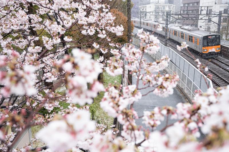 200329 雪と桜と東武電車