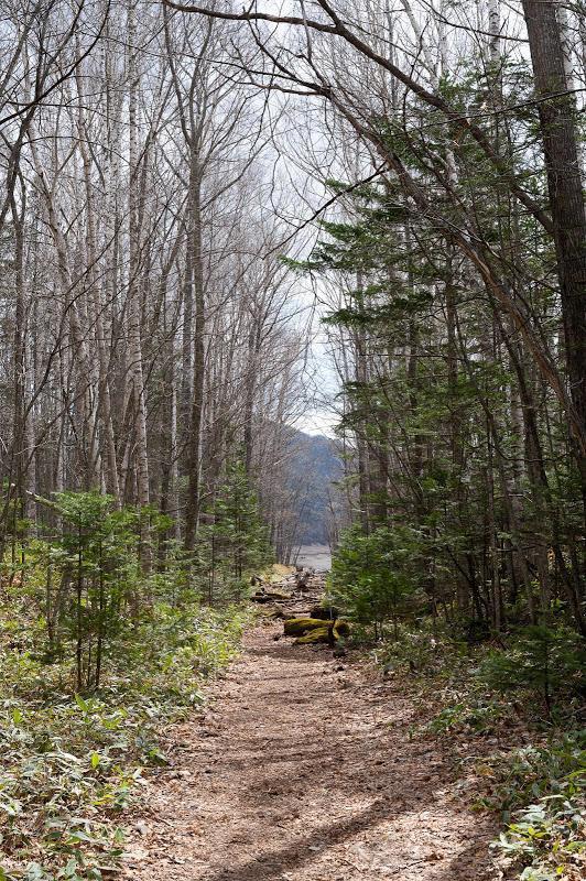 190503 旧線跡の林道