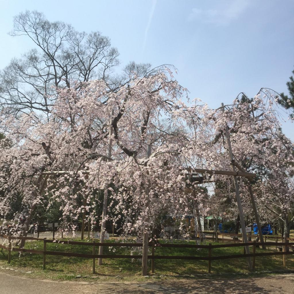 2018年の桜の写真 2