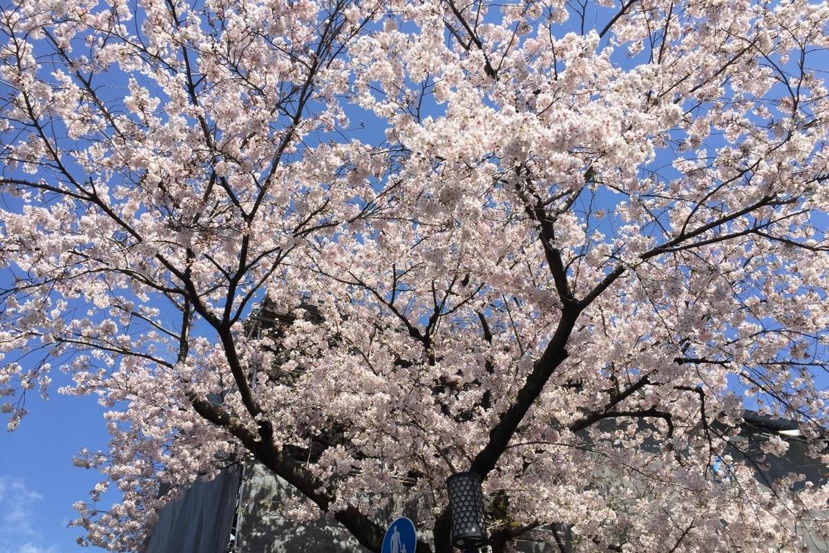 2019年の京都の桜 その1