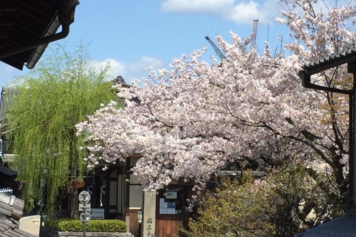 2019年の京都の桜 その2