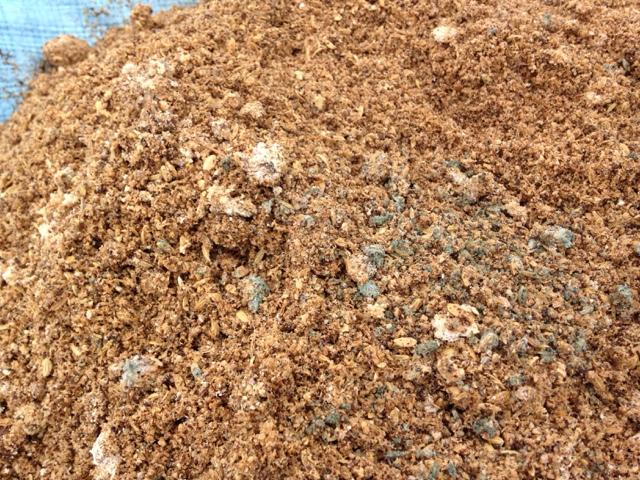 米ぬか乳酸菌肥料 青カビ