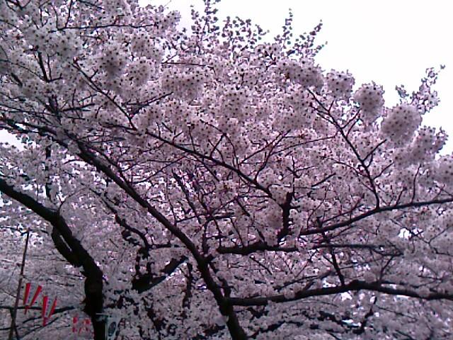 200803301242_022.jpg
