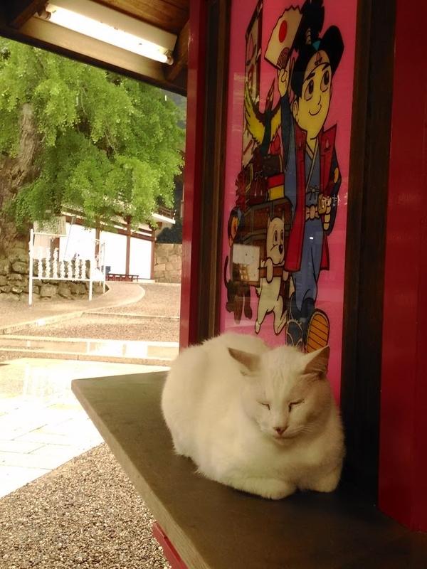 omikuji-cat