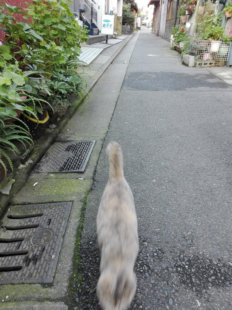cat-shiro2